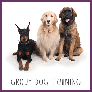 Group Dog Training Westchester NY
