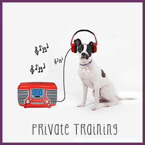 Private Dog Training Westchester NY