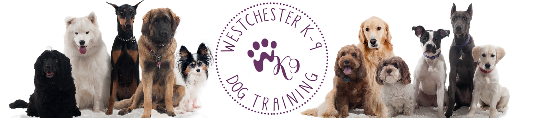 Dog Training Westchester NY