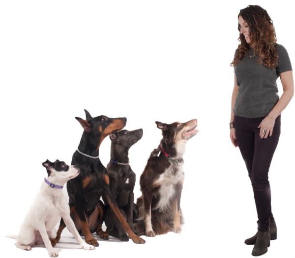 Dog Training Westchester