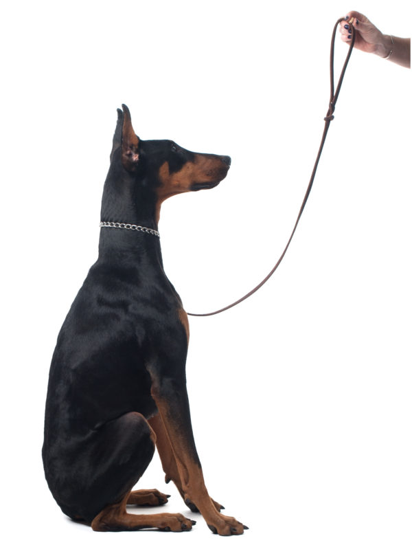 Private Dog Training Serving Westchester County NY