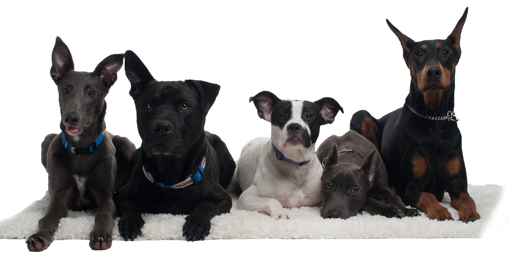 group-dog-training-westchester