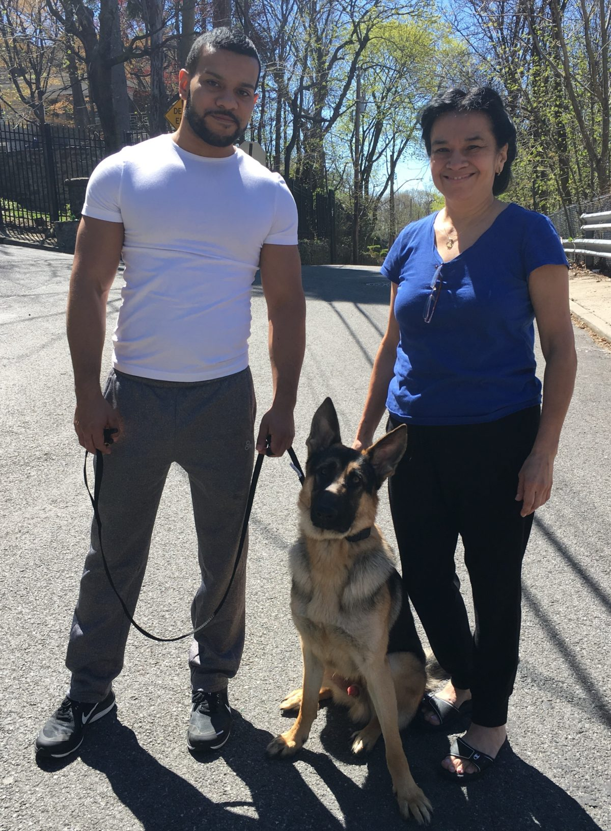 German Shepherd Dog Training Yonkers